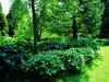 zomerinarboretum.jpg